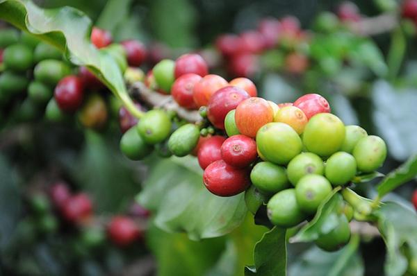 coffee-747604_640.jpg