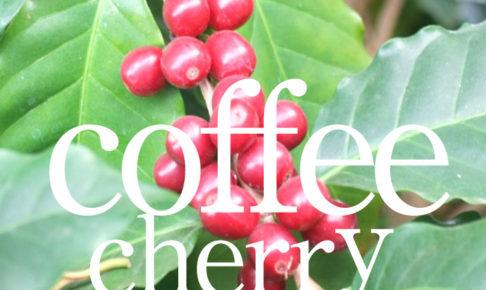 コーヒーブログのコーヒーチェリーの記事